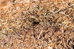 Anthill Royalty Free Stock Photo