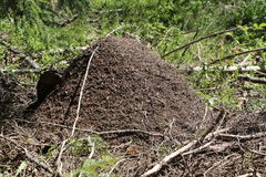 Anthill in forest. Big ants house, anthill in forest royalty free stock photography