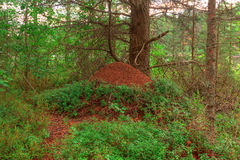 Anthill in forest Royalty Free Stock Images