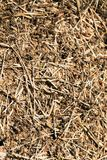 Anthill in the forest. Large colony of ants Royalty Free Stock Image