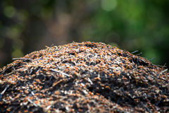 Anthill in forest short depth of field Royalty Free Stock Photo
