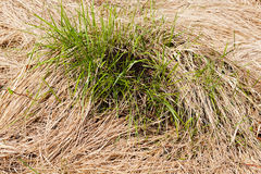 Anthill on the grass Stock Photography