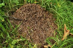 Anthill Stock Photography