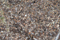 Anthill macro Royalty Free Stock Images