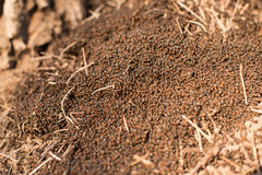 Anthill macro photo, big anthill close up Royalty Free Stock Images
