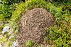 The anthill Stock Image