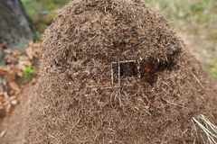 Anthill. This photo shows an anthill Royalty Free Stock Image