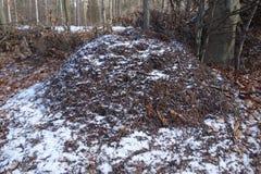 Anthill Snowy Стоковые Изображения RF