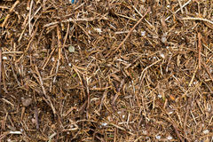 Anthill of a sunny day , close up Stock Photo