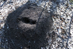 Anthill top Royalty Free Stock Images