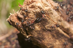 Anthill close up Stock Photography