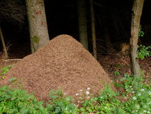 Anthill of wood ants in forest Stock Photos