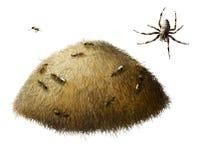Anthill z mrówkami. Pająk. zdjęcie stock