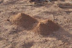 Anthills в пустыне стоковые фото