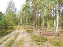 Anthills в древесинах стоковое изображение