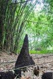 Anthills и бамбуки на Waeruwan садовничают в парке PhutthamonthonBuddhist в районе Phutthamonthon, провинции Nakhon Pathom Thail стоковое фото