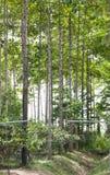 Anthocephalus Chinensis träd Royaltyfria Foton