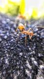 Anthology of Ants Stock Image
