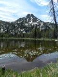 Anthony Lakes Water lilly sikt Royaltyfri Fotografi