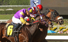 Anthony's Cross Wins the Robert B. Lewis Stakes Stock Photography