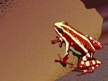 Anthonyi rosso Dendrobatidae di Epipedobates della rana Immagini Stock Libere da Diritti