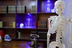 Anthropology lab. Anthropology work studio with human skeleton Stock Image