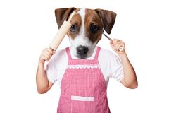 Anthropomorphic dog with kitchenware Royalty Free Stock Images