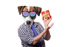 An anthropomorphic dog with present box Royalty Free Stock Photography