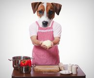 Anthropomorphic dog trying to cooking Stock Photography
