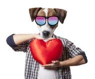 Anthropomorphic hund med hjärtaform arkivbilder