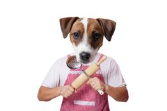 Anthropomorphic hund med kitchenware fotografering för bildbyråer