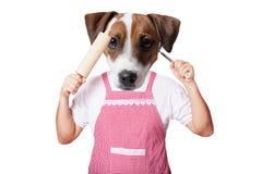 Anthropomorphic hund med kitchenware royaltyfria bilder