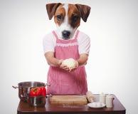 Anthropomorphic hund som försöker till att laga mat arkivbild