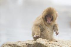 Anthropomorphismus: Überraschter Baby-Schnee-Affe Stockbild