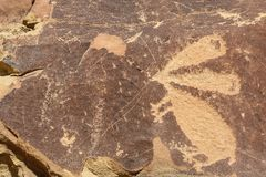 Anthropomorphs Zoomorphs. A rabbit in the group of en toto pecked figures. one of many petroglyphs and part of the early archaic period 8000-6000 BC. these are royalty free stock images