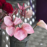 Anthurium ή φλαμίγκο λουλούδι Τοπ όψη Στοκ εικόνες με δικαίωμα ελεύθερης χρήσης