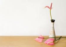 Anthurium βάζο λουλουδιών Στοκ Εικόνες