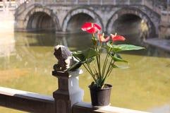 Anthurium εγκαταστάσεις με τα κόκκινα λουλούδια στη γέφυρα του ναού Yuantong Στοκ φωτογραφίες με δικαίωμα ελεύθερης χρήσης