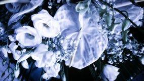 Anthurium και τριαντάφυλλα Στοκ Εικόνα