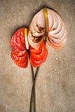 anthurium καφετί μάρμαρο Στοκ Φωτογραφία