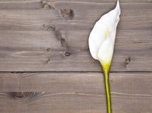 anthurium λευκό λουλουδιών Στοκ Φωτογραφίες