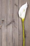 anthurium λευκό λουλουδιών Στοκ φωτογραφία με δικαίωμα ελεύθερης χρήσης