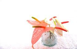 Anthurium λουλούδια σε ένα βάζο γυαλιού Στοκ εικόνα με δικαίωμα ελεύθερης χρήσης