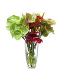 anthurium λουλούδια φλαμίγκο Στοκ Φωτογραφίες