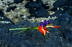 anthurium μαύρη λάβα Στοκ εικόνα με δικαίωμα ελεύθερης χρήσης