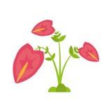 anthurium φυτό φύλλων εξωτικό Στοκ Φωτογραφία