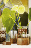 Anthurium φύλλα στα ασιατικά γυαλιά τσαγιού Στοκ εικόνες με δικαίωμα ελεύθερης χρήσης