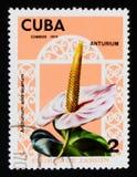 Anthurium andraeanum, Flowers serie, circa 1974 Stock Photos