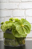Anthurium boquet Royalty Free Stock Photo