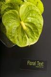 Anthurium boquet Στοκ Εικόνες